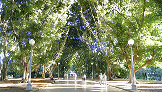 Hyde Park, Sydney - A fig-lined avenue in Hyde Park