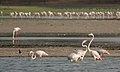 Thol Lake - Gujarat, India - Flickr - Emmanuel Dyan (12).jpg
