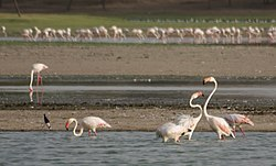 Thol Lake - Gujarat, India - Flickr - Emmanuel Dyan (12).jpg