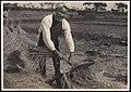 Threshing Rice (1914 by Elstner Hilton).jpg