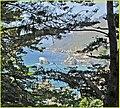 Through the Trees, Chris (13387670505).jpg