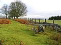 Tibbie Tamson's Grave - geograph.org.uk - 625951.jpg