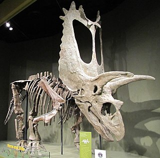 <i>Titanoceratops</i> genus of reptiles (fossil)