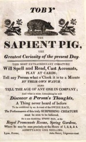Human–animal communication - Poster for Toby the Sapient pig