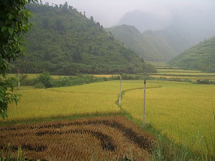 Rice fields in Tongshan County Tongshan-County-rice-fields-9883.jpg