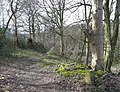 Track to Upper Gatehead Mill, Stainland - geograph.org.uk - 721351.jpg