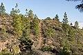 Trail near Tunte, San Bartolomé de Tirajana (MGK25104).jpg