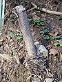 Trametes versicolor fungus - geograph.org.uk - 109003.jpg