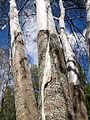 Tree covered by net5.jpg