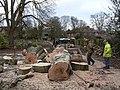 Tree felling in Epperstone churchyard - geograph.org.uk - 1628984.jpg