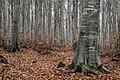 Tree life.jpg