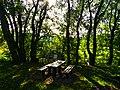 Trees And Shadows - panoramio (1).jpg