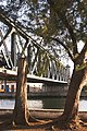 Trees Near Puente Calixto Garcia.jpg