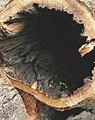 Trees bark.jpg