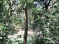 Trekking @ Wayanad wildlife Sanctuary - panoramio.jpg