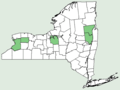 Triantha glutinosa NY-dist-map.png
