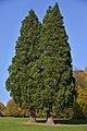 Trois séquoias géants (22164888863).jpg