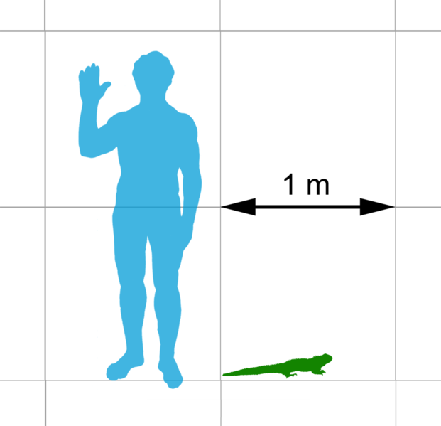 http://upload.wikimedia.org/wikipedia/commons/thumb/1/1d/Tuatara_scale.png/621px-Tuatara_scale.png