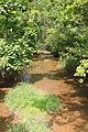 Turtle Creek looking upstream.JPG