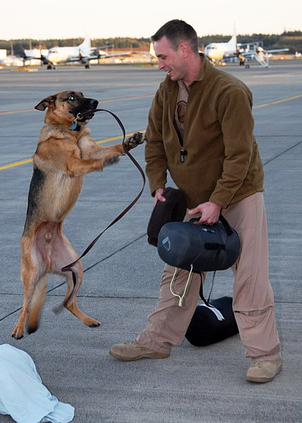 File:US Navy 091112-N-9860Y-007 Lt. Luke Brown is greeted by his German shepherd, Smokey, at the Naval Air Station Whidbey Island flight line.jpg