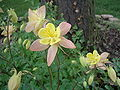 Unique flower.jpg