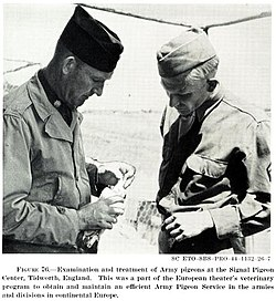 United States Army Pigeon Service.jpg