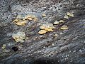 Unknown fungi-9.jpg