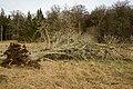 Unterhölzer Wald-3470-IridientEdit.jpg
