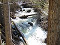 Up Peteetneet Creek from Grotto Falls Trail, May 16.jpg