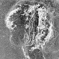 Veil Nebula (35970388963).jpg