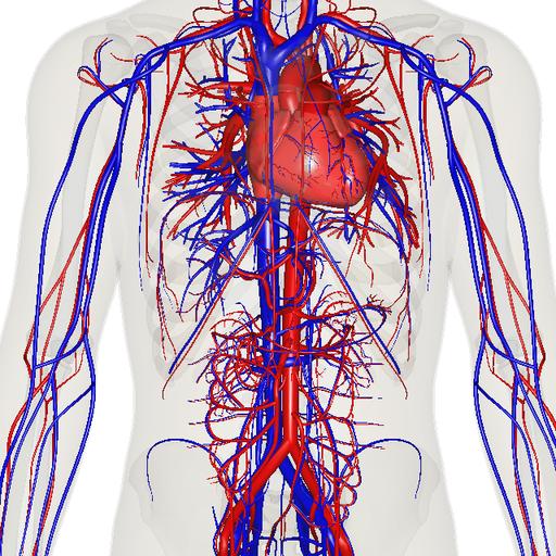 Apparato Cardiovascolare