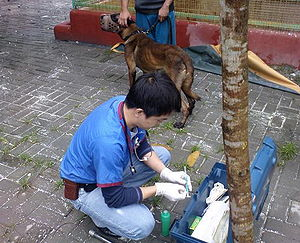English: veterinarian on service