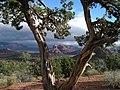 View from Red Rock Loop road (3879564434).jpg
