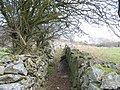 View upslope along the lower walled section of the Braich-y-dinas path - geograph.org.uk - 413128.jpg