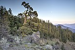 Views from Cascade-Siskiyou National Monument (18362936785).jpg