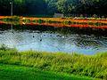 Vilas Park Lagoon - panoramio (5).jpg