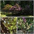 Villa Haas Sinn - Rhododendren Blüte im Park.jpg
