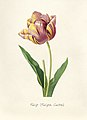 Vintage Flower illustration by Pierre-Joseph Redouté, digitally enhanced by rawpixel 06.jpg