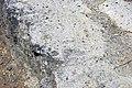 Volcanic tuff (Sonoma Volcanics, Upper Pliocene, 3.2-3.4 Ma; Calistoga Petrified Forest, Calistoga, California, USA) 9 (49092975402).jpg