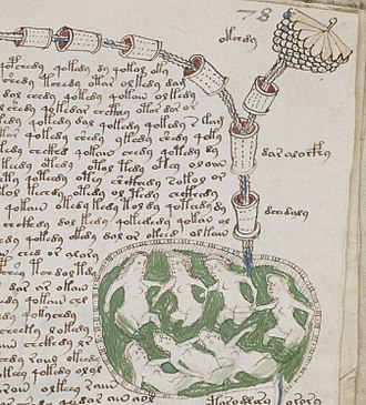 Voynich manuscript - A detail from the biological section of the manuscript