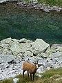 Vysoké Tatry, Dolina Bielej vody, cestou od Zeleného plesa na Jahňací štít (43).JPG
