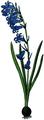 WWB-0038-014-Scilla nutans-crop.png