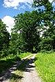 Waldweg im Rossert - geo.hlipp.de - 37759.jpg