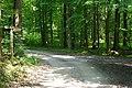 Waldweg mit Wegweiser - geo.hlipp.de - 11390.jpg