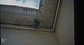 Wasps sealing brood cells in Nassau porch. (38839865192).jpg