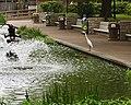 Water Bird (5583481204).jpg