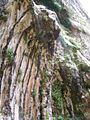Weeping Rock, Zion Canyon, Zion National Park, Utah (68919915).jpg