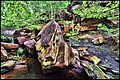 Wet Rocks at Osage Hills State Park, Oklahoma - panoramio.jpg