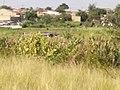 Wetlands vegetables.jpg