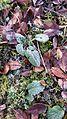 White frost in Botanical Garden Jena 20150215 122939.jpg